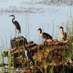 Mokolodi, Lake Gwithian, mit Kalahari Calling