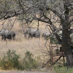 Elefanten im Camp - Selbstfahrerreise Kalahari Calling