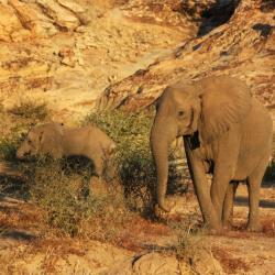 Elefanten im Tuli Gebiet