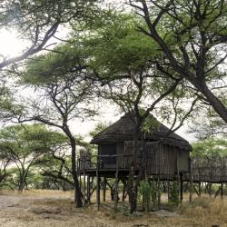 Onguma Treetops Camp