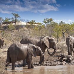 Elefanten am Wasserloch des Elephant Camps