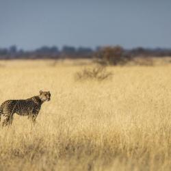 In der Kalahari