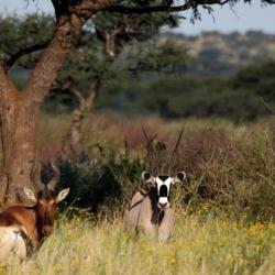 Wildtiere auf dem Gelände der Ondekaremba Lodge