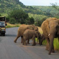 Elefanten im Pilanesberg Nationalpark