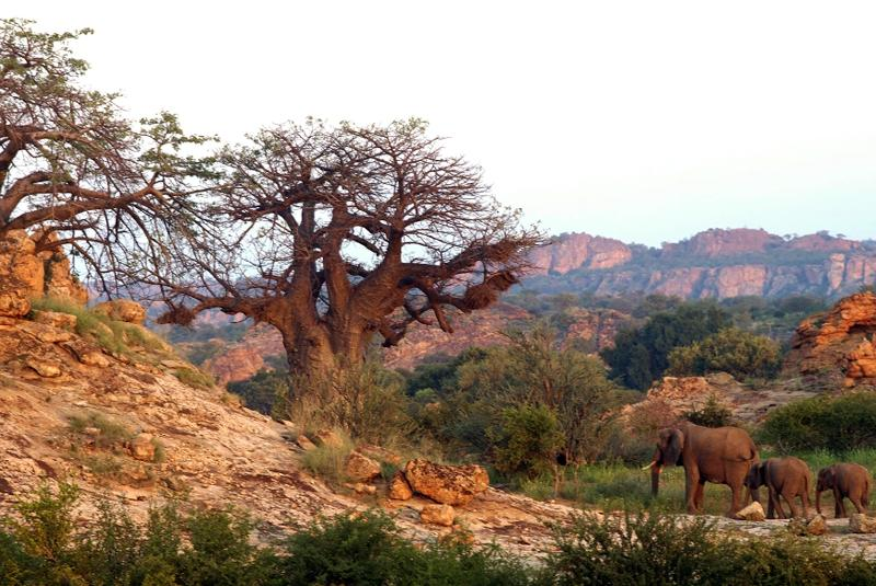 Tuli Landschaft - Selbstfahrer mit Kalahari Calling