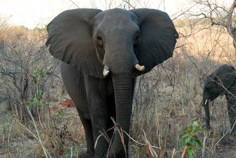 Begegnung mit einem Elefant